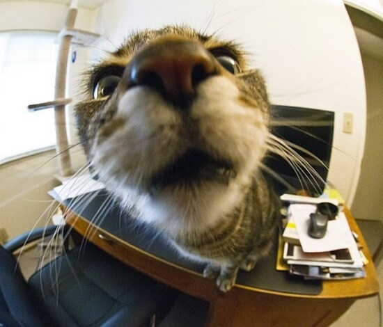 cat-staring-into-a-camera-lens-on-top-of-an-office-desk.jpeg