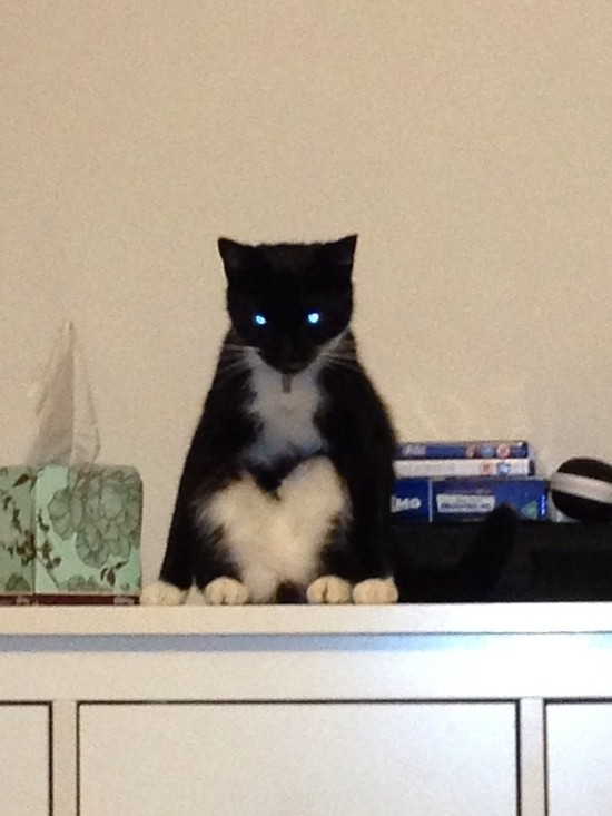 my-cat-also-likes-to-sit-and-stare-albeit-in-a-slightly-more-possessed-way-132285.jpg