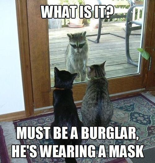Top-30-Funny-Cat-Memes-Humor-jokes.jpg