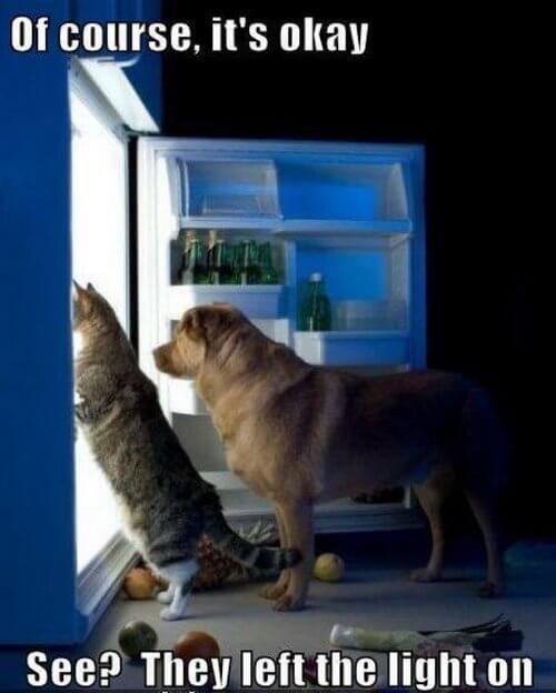 dog-and-cat-memes-4.jpg