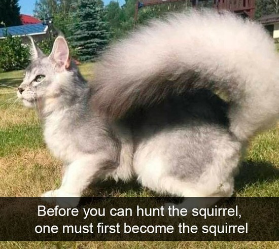 funny-kitty-memes-squirrel-tail.jpg