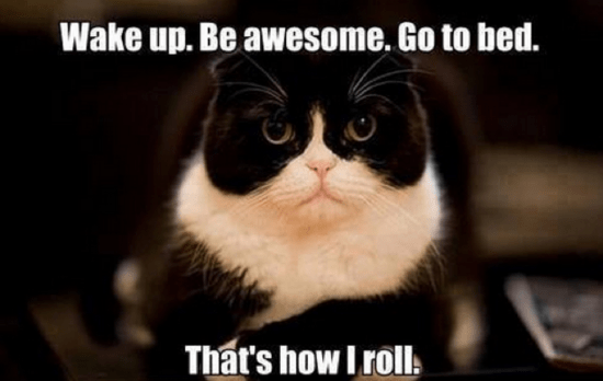 cat-memes-9.png