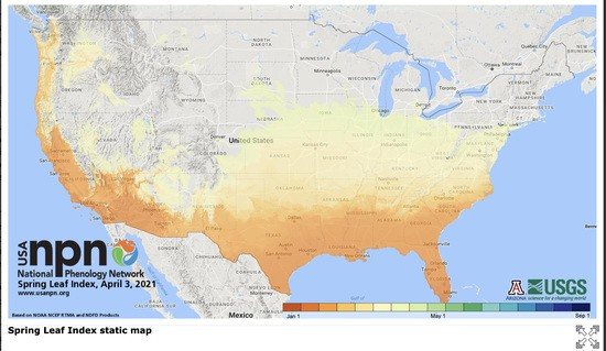 Map of U.S.A. shaded to show progress of spring leaf and bloom emergence.